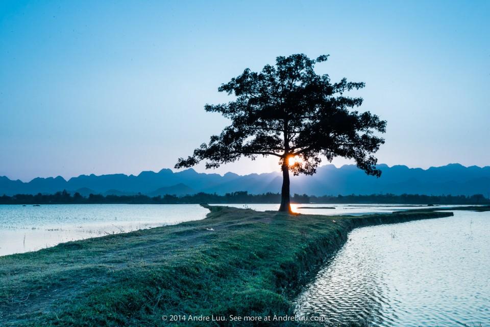 Lone Tree Warmness