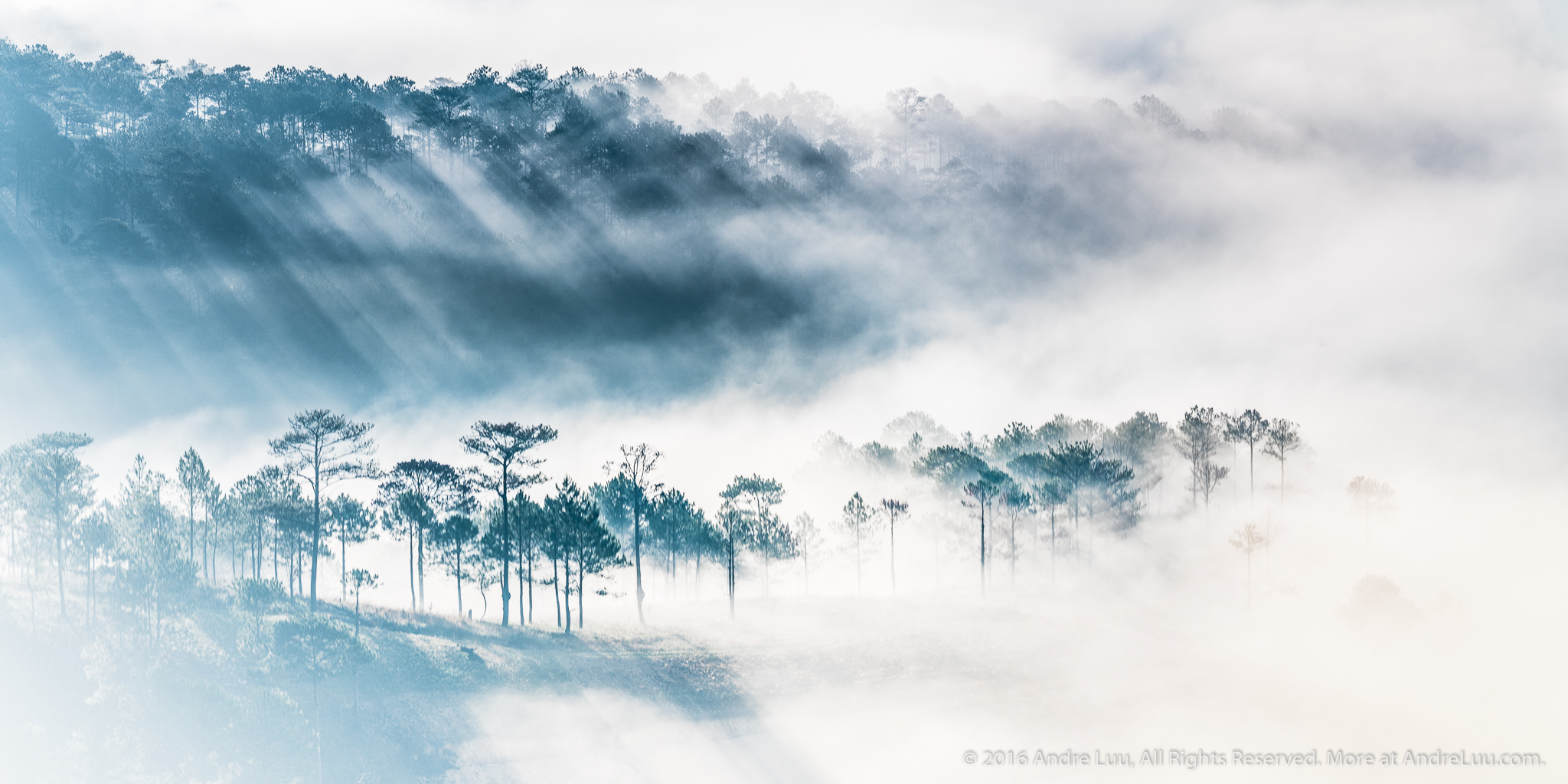 BỨC HỌA ĐỒI SƯƠNG (Hillside Pastel) 1/50s f/11 ISO 100 WB 4450K. Sony a7rII + Contax N 70-300 @ 140mm. Hòn Bồ, Dalat. 12/2/16 @ 6:55am.