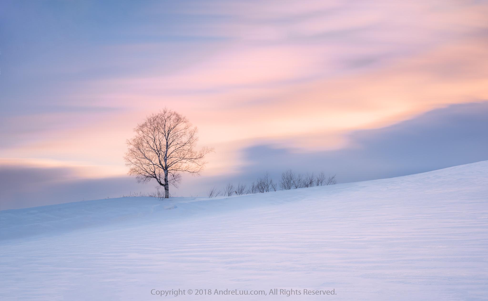 Tuyết Băng Ánh Hồng (Pink Icy Snow) 103s f/11 ISO 50 WB 8000K. Sony a7r3 + Sony 24-70 f/2.8 GM @ 50mm. Hokkaido, Japan.