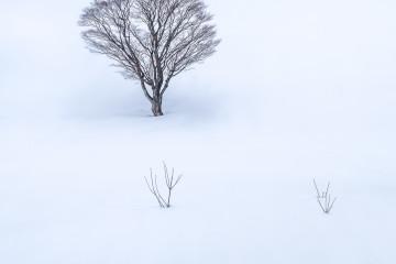 XƠ THÂN XUYÊN TUYẾT (Bare Through Snows) 1/25s f/11 ISO100 WB 5000K. Sony a7r3 + Sony 24-70 f/2.8 GM @70mm. Hokkaido Japan.