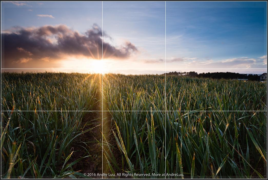 Canh mặt trời là điểm nhấn vào điểm TLV trên trái.